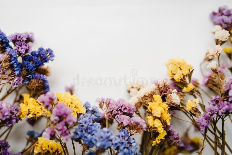 Kwitnie skład, ramowy robić wysuszeni barwioni kwiaty na białym tle Miejsce dla teksta i projekta fotografia royalty free