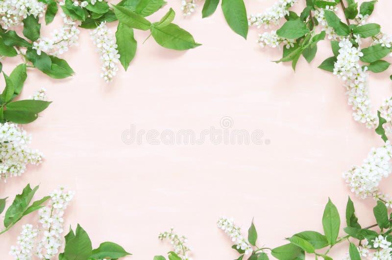 Kwitnie sk?ad Wiosny lub lata t?o; ?wie?ych kwiat?w ptasia wi?nia na r??owym tle - Mieszkanie nieatutowy, odg?rny widok, kopii pr zdjęcia stock
