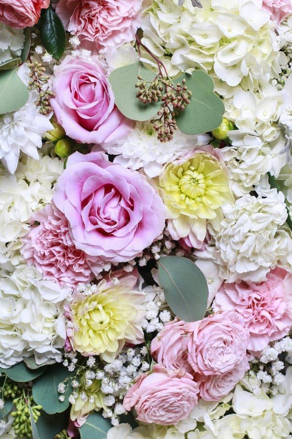 Kwitnie tło z wzrastał, dalia, hortensia i goździka flo, obrazy royalty free
