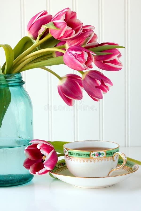 kwitnie teacup zdjęcia royalty free