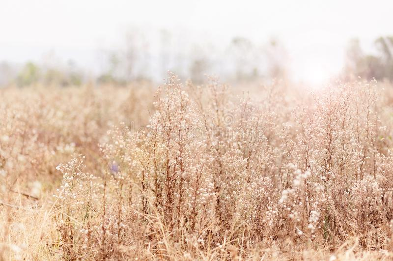 Kwitnie trawy fotografia stock