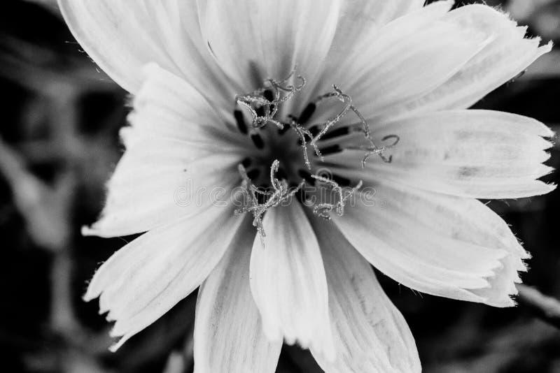 Kwitnie w czarny i biały, makro-, i szczegółach abstrakcjonistyczna natura obraz stock