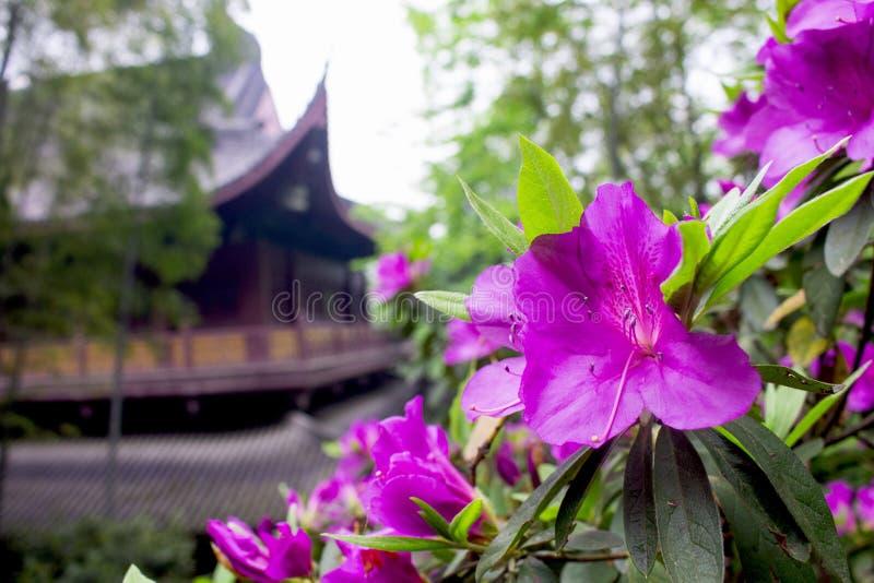 Kwitnie w Lingyin świątyni, Westlake, Hangzhou, Chiny obraz royalty free