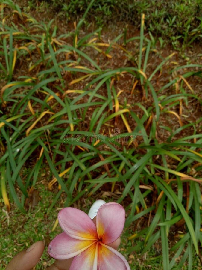kwitnie w ogródzie podczas gdy ćwiczący zdjęcia royalty free