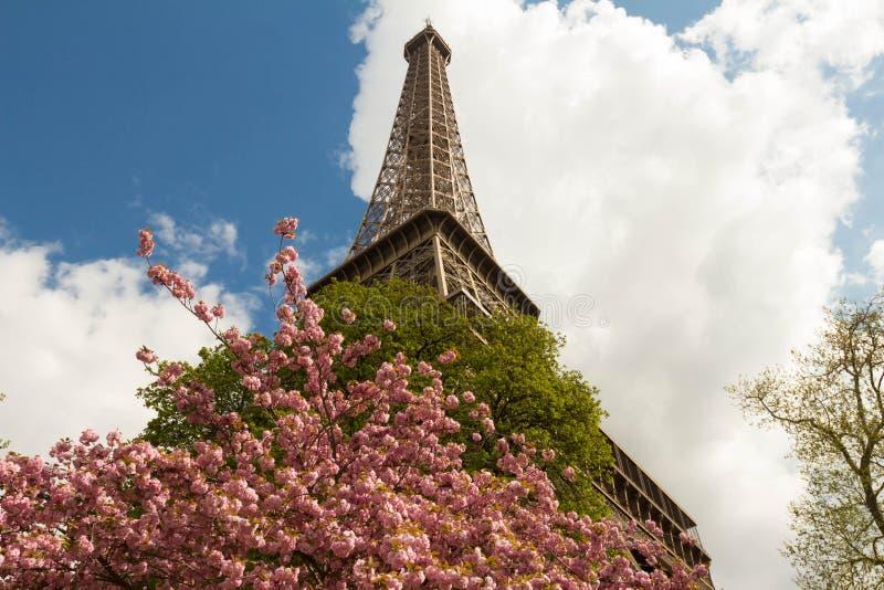 Kwitnie wieża eifla i fotografia royalty free