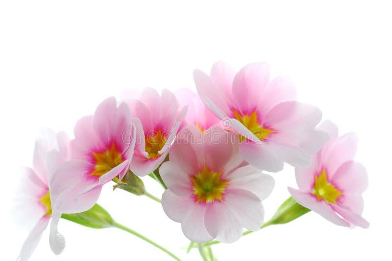 kwitnie wiosnę obraz stock