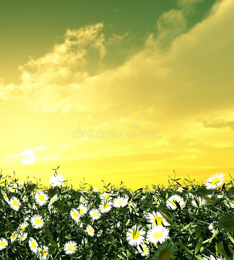 kwitnie zmierzch zdjęcia stock