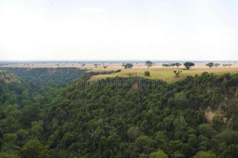 Kyambura Gorge. Is part of the Queen Elizabeth National Park QENP in Uganda. It is home to a variety of wildlife, including chimpanzees, the only primates in stock photos
