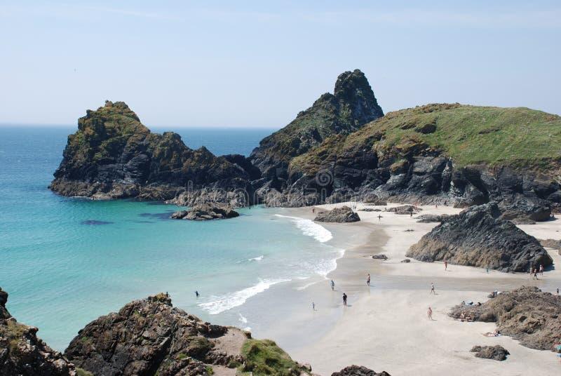 Kyanace zatoczka, jaszczurka, Cornwall obrazy royalty free