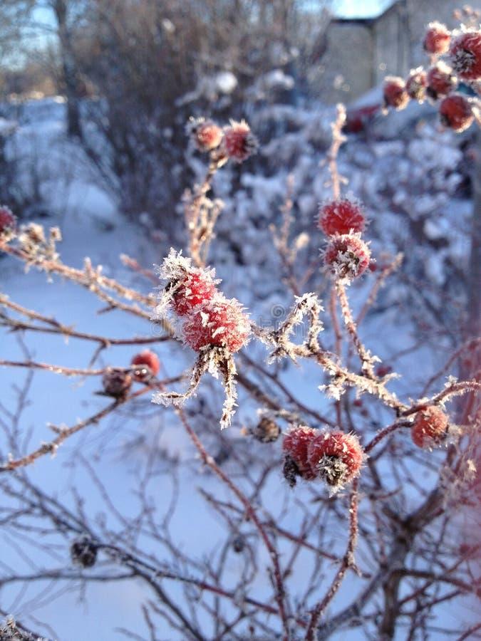 Kyld morgon arkivfoton