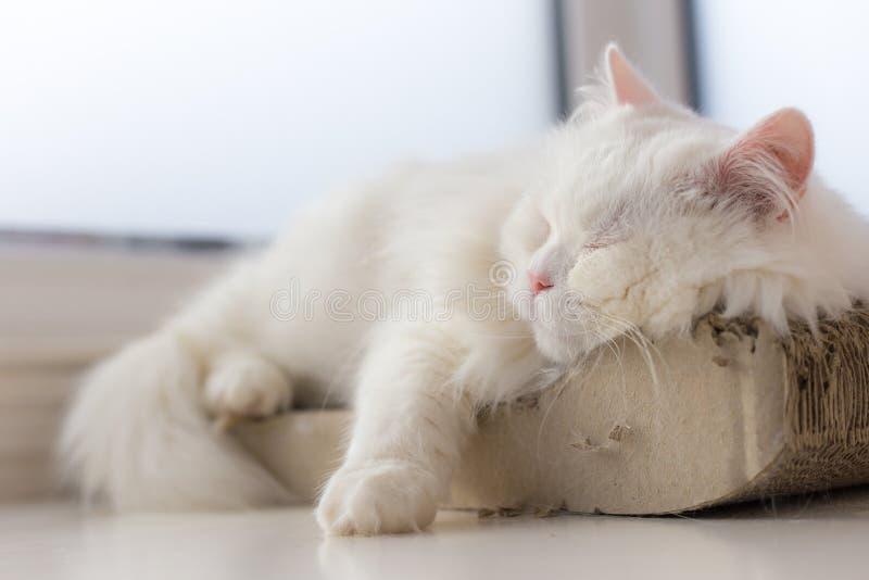 Kyld ut katt som tar en ta sig en tupplur på hans smultronställe vid fönstret royaltyfri foto