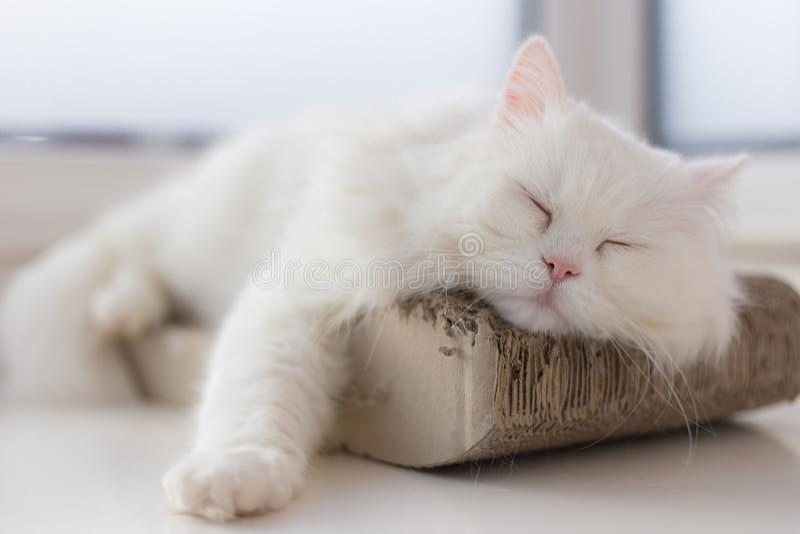 Kyld ut katt som tar en ta sig en tupplur på hans smultronställe vid fönstret royaltyfri bild