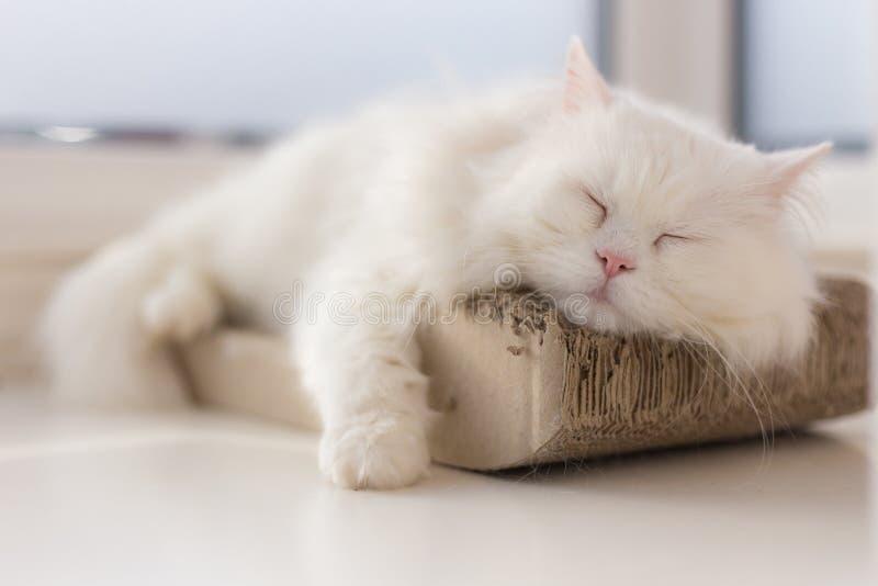 Kyld ut katt som tar en ta sig en tupplur på hans smultronställe vid fönstret fotografering för bildbyråer