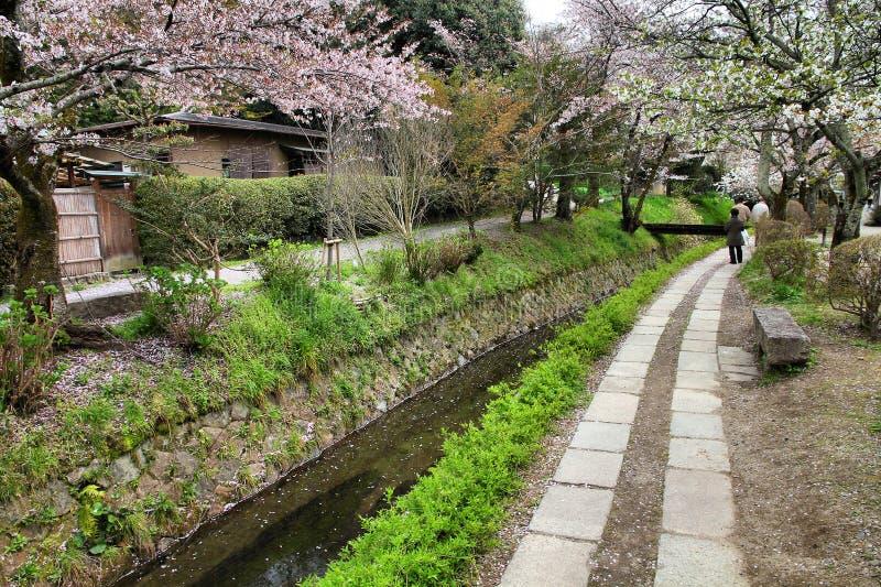 Kyoto. Japan - Philosopher's Walk, a hiking path famous for its cherry blossom (sakura stock photos
