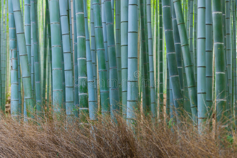 Kyoto bamboo groove stock images