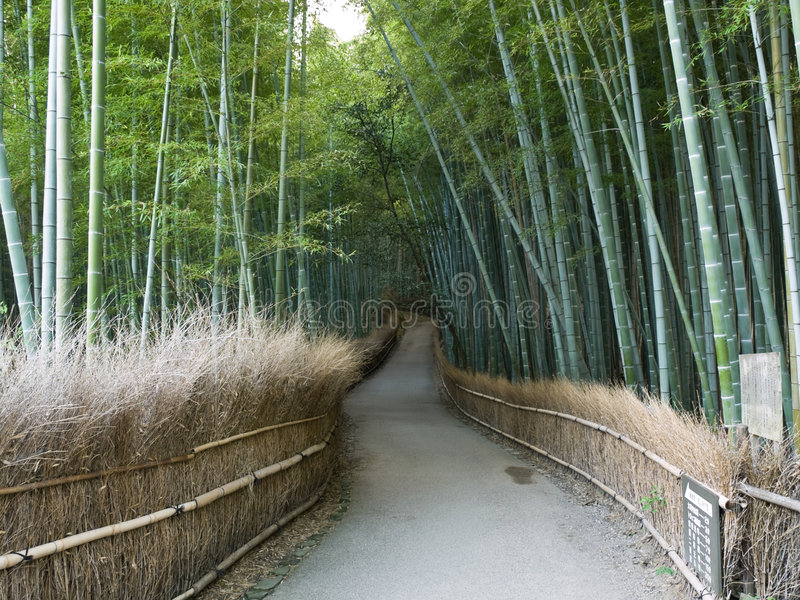 Kyoto Bamboo Grove Royalty Free Stock Images