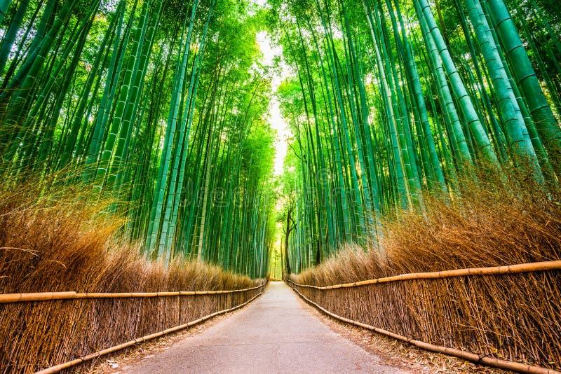 'Kyoto bambuskog arkivbild