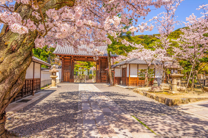 Kyoto and Cherry Blossom royalty free stock image