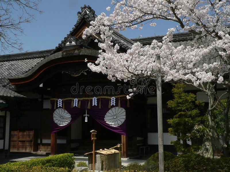 Kyoto cherry blossoms stock image