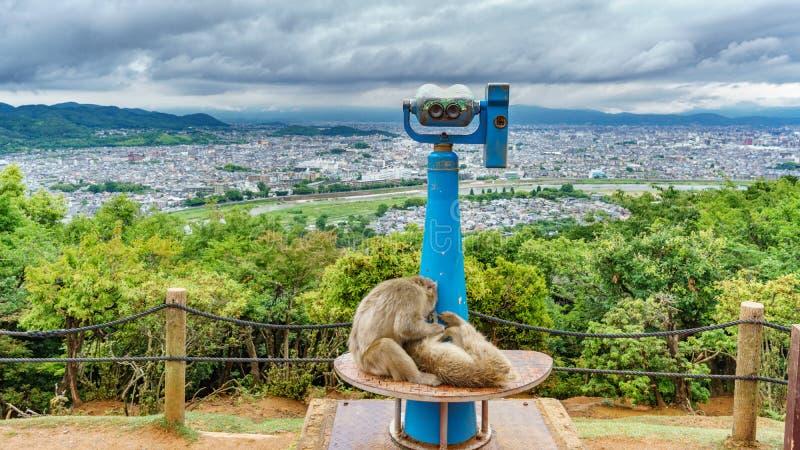 Kyoto dalla montagna di Arashiyama con le scimmie immagini stock