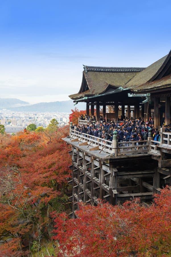 Kyoto, Japón - 25 de noviembre de 2016 - el otoño hermoso c de Momiji fotografía de archivo
