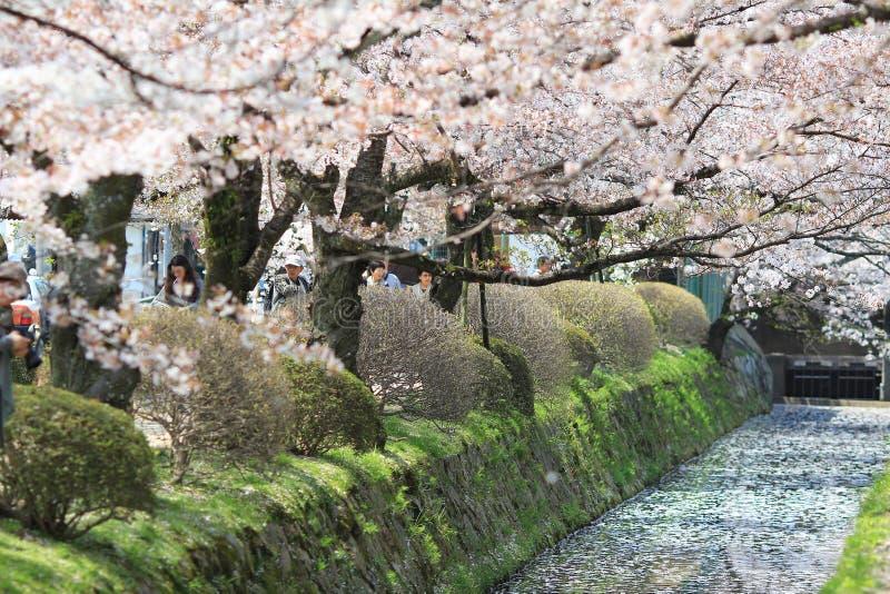 Kyoto, Japón en Philosopher& x27; manera de s en la primavera fotografía de archivo libre de regalías