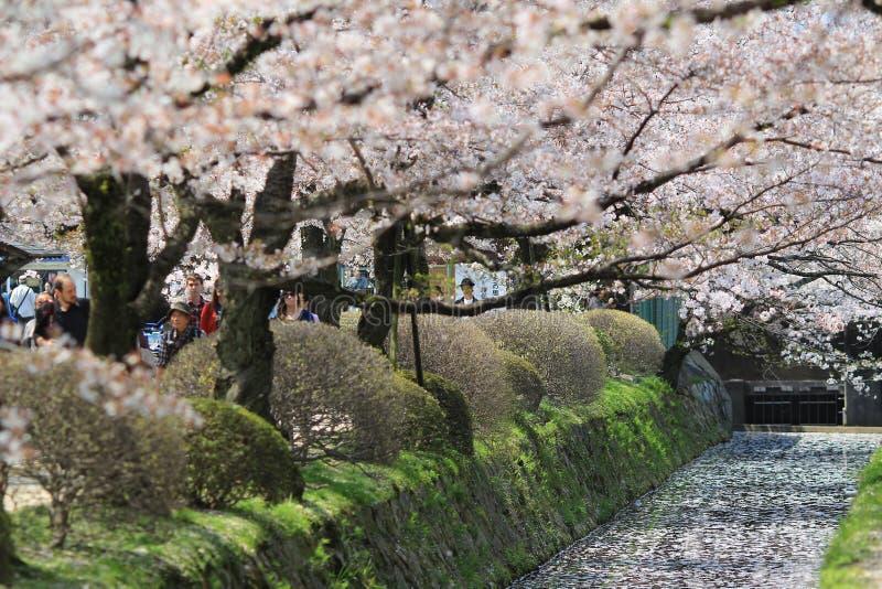Kyoto, Japón en Philosopher& x27; manera de s en la primavera fotografía de archivo