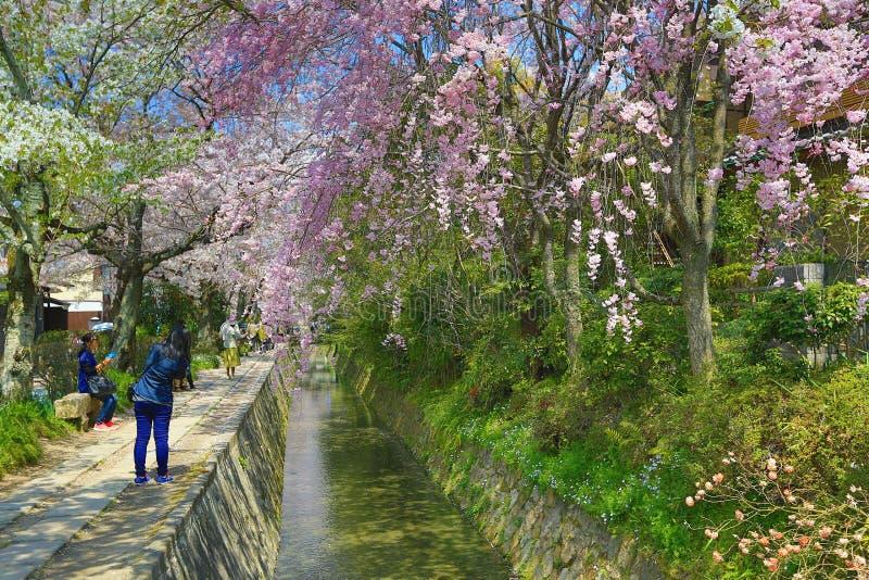 Kyoto, Japón en Philosopher& x27; paseo de s en la primavera foto de archivo