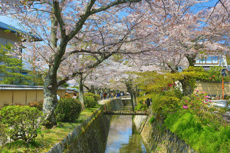 Kyoto, Japón en Philosopher& x27; paseo de s en la primavera fotos de archivo libres de regalías