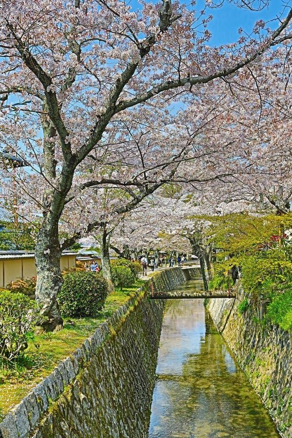Kyoto, Japón en Philosopher& x27; paseo de s en la primavera imagenes de archivo