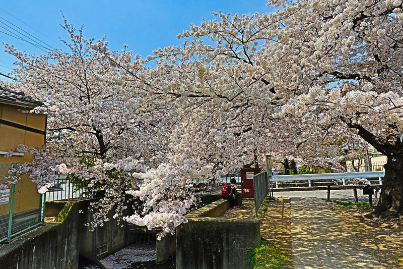 Kyoto, Japón en Philosopher& x27; paseo de s en la primavera imagen de archivo