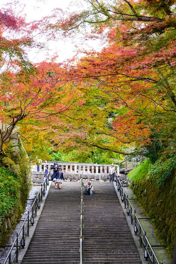 Kyoto, Jap?n - 25 de noviembre de 2016 - el fondo colorido del arce del otoño hermoso de Momiji en el templo y Kyoto, Japón de Ki foto de archivo