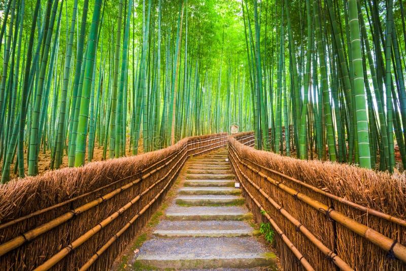Kyoto Japan bambuskog royaltyfri foto