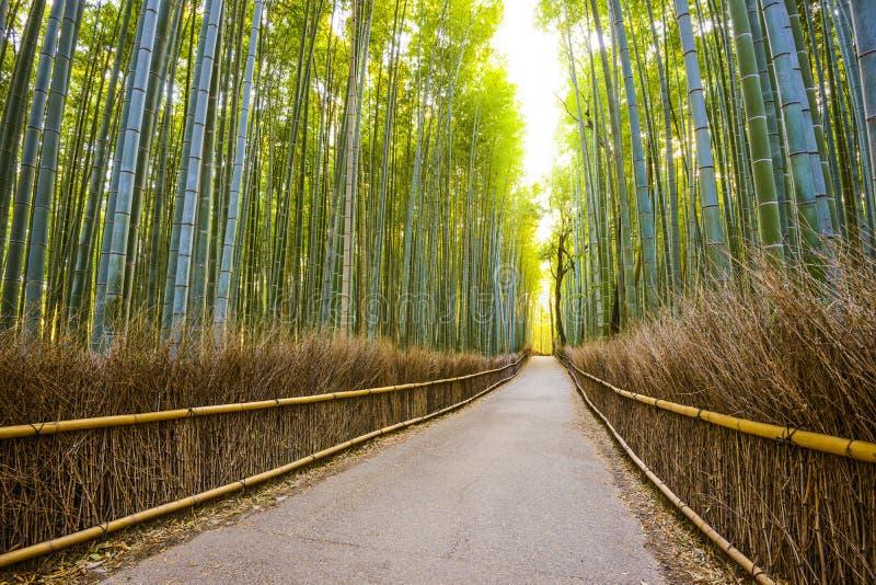 Kyoto Japan bambuskog arkivbilder
