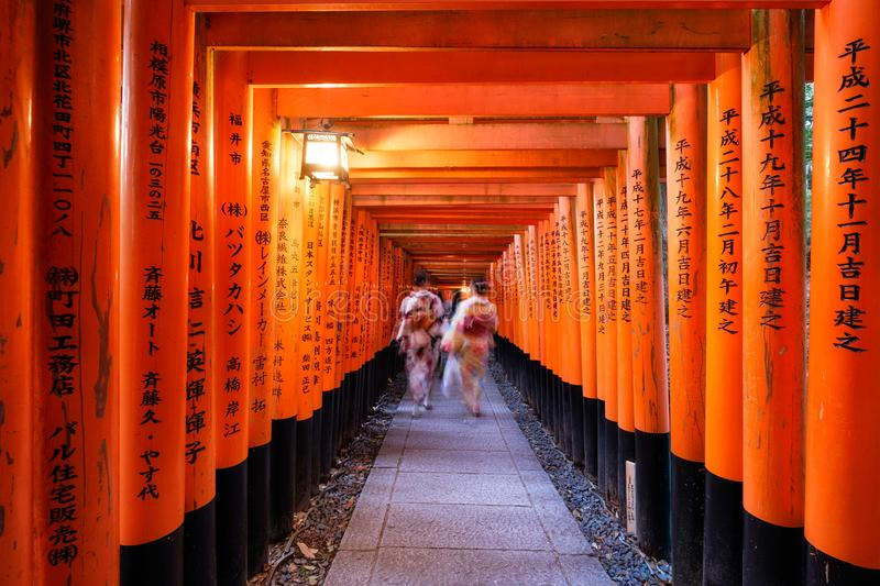 Kyoto, Japan - Nov 11 2017 : Woman dressed kimono walking in red ancient wood torii gate at Fushimi Inari. Shrine royalty free stock photos