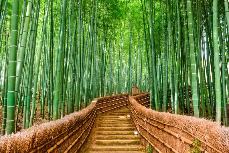 Kyoto, Japonia bambusa las obrazy royalty free