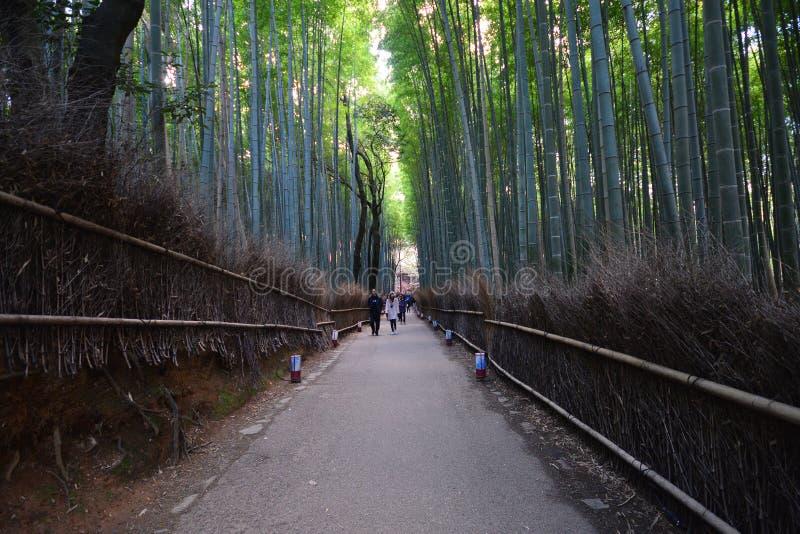 KYOTO JAPONIA, Grudzień, - 6, 2016: Bambusowy las Arashiyama ne zdjęcia stock