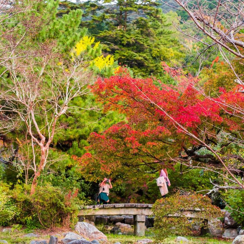 KYOTO JAPONIA, LISTOPAD, - 7, 2017: Widok jesień krajobraz w parku Odbitkowa przestrzeń dla teksta obraz stock