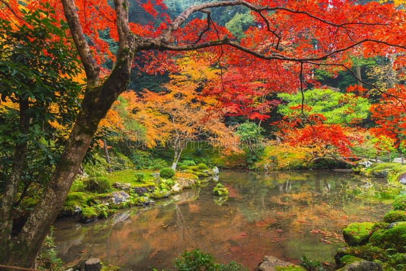 Kyoto jesieni Kolorowego sezonu liścia klonowego Czerwony ogród fotografia royalty free
