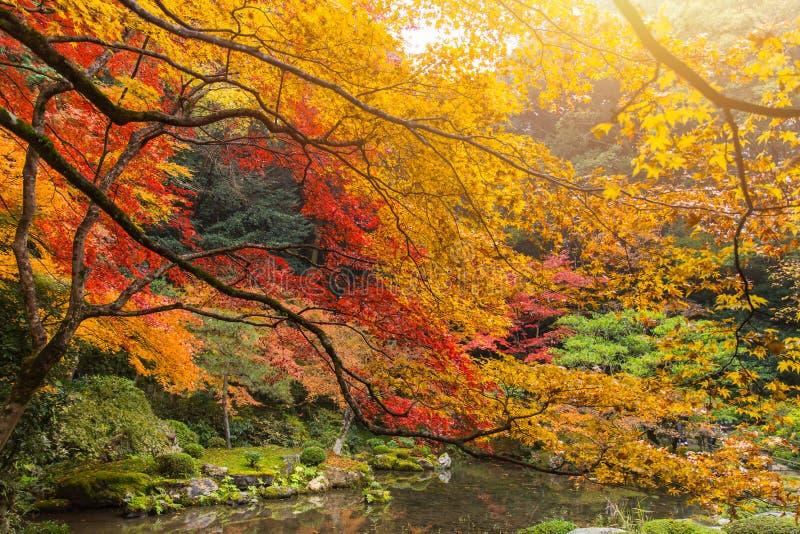 Kyoto jesieni Kolorowego sezonu liścia klonowego Czerwony ogród w Japonia zdjęcie stock