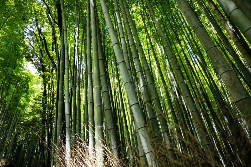 Kyoto lanshan, Japonia fotografia stock