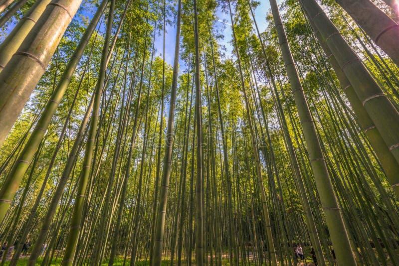 Kyoto - 30 maj 2019: Kameyamaparken i Kyoto, Japan arkivfoto