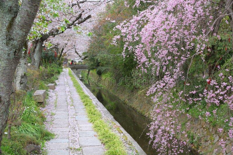 Kyoto Philosophers Way. Kyoto, Japan - Philosopher's Way, a walkin path famous for its cherry blossom (sakura royalty free stock photo