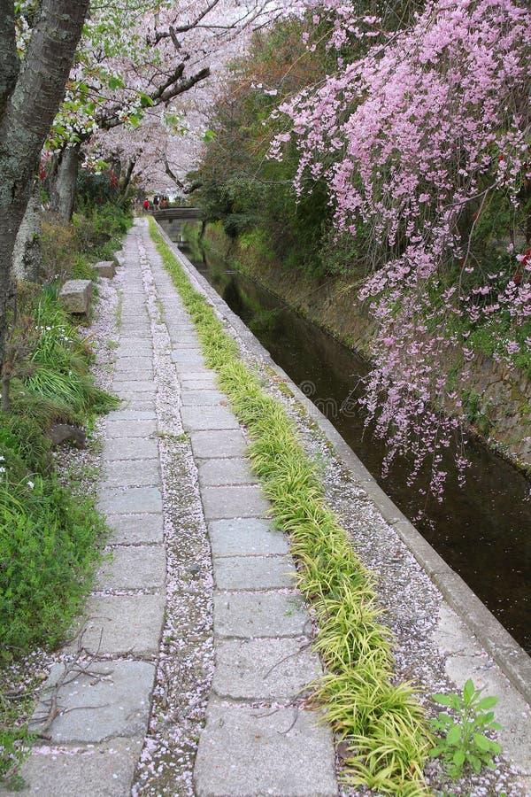 Kyoto spring. Kyoto, Japan - Philosopher's Way, a walkin path famous for its cherry blossom (sakura royalty free stock photo