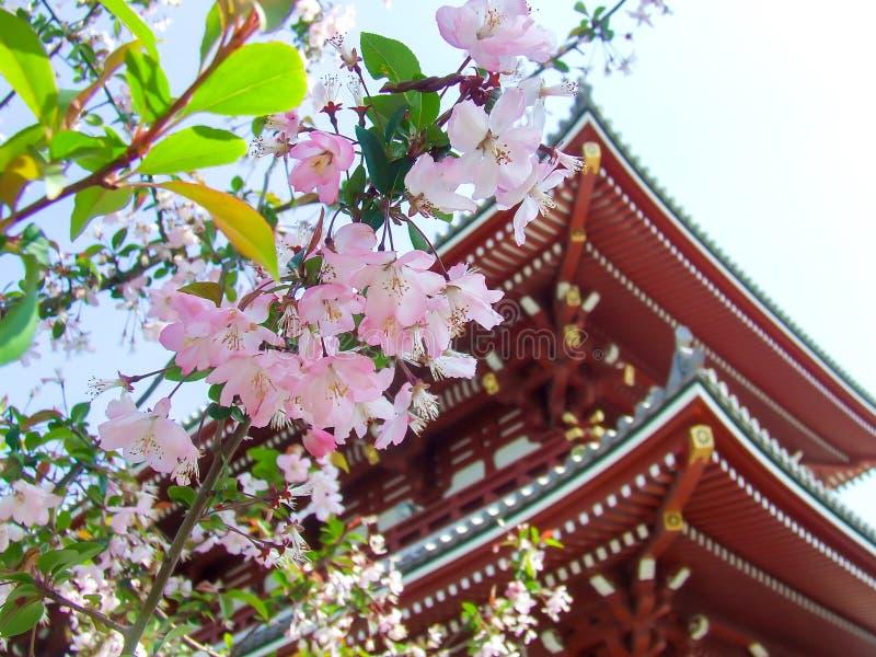 Kyoto, trädgård och tempel, Japan arkivbild