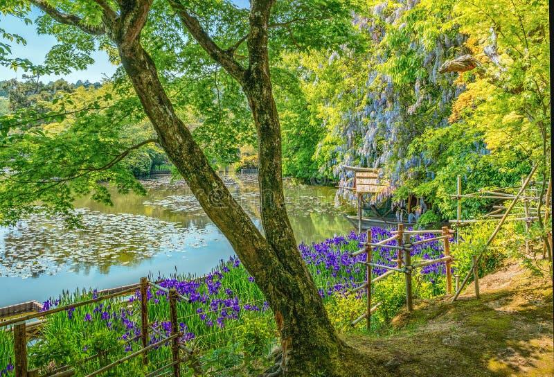 Kyoyochi Pond at Ryoanji Temple in Kyoto. Japan royalty free stock photography