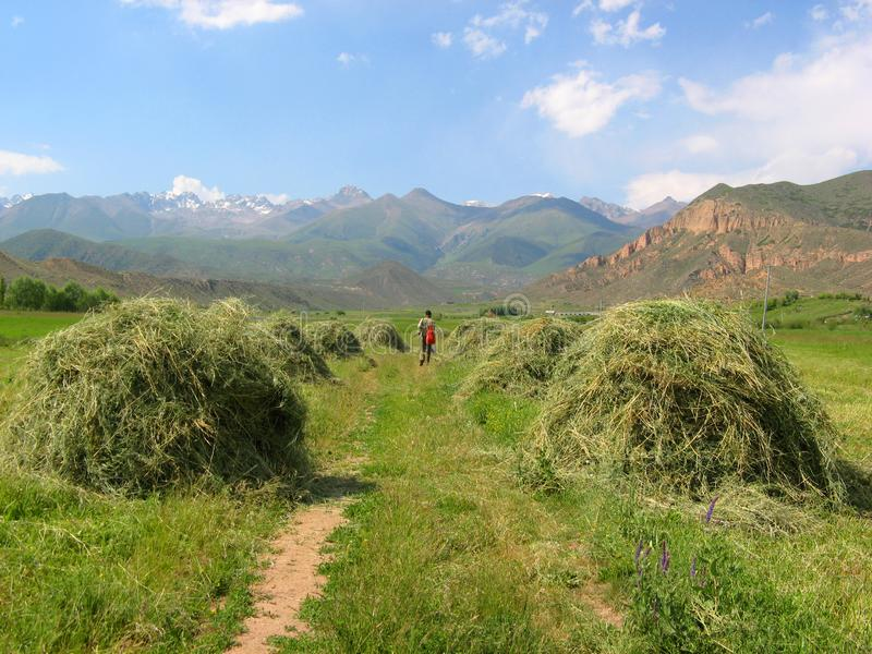 Kyrgyzstan, the Tien Shan mountains. A beautiful summer landscape with freshly mowed hay in the foreground, a figure of a lonely stock photo