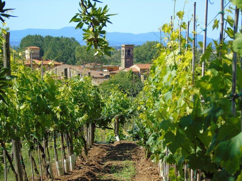 Kyrka och vingård royaltyfri fotografi
