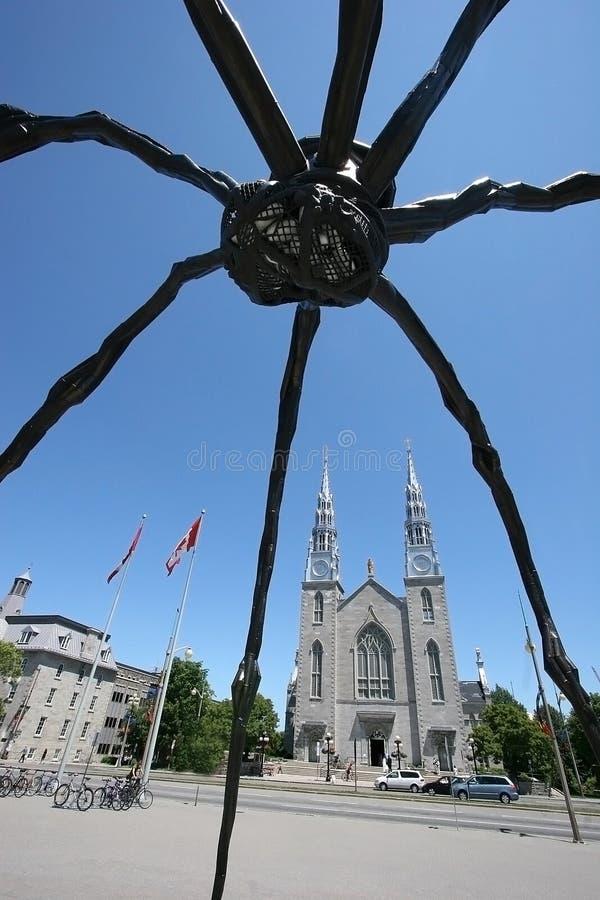 kyrklig jätte- spindel fotografering för bildbyråer