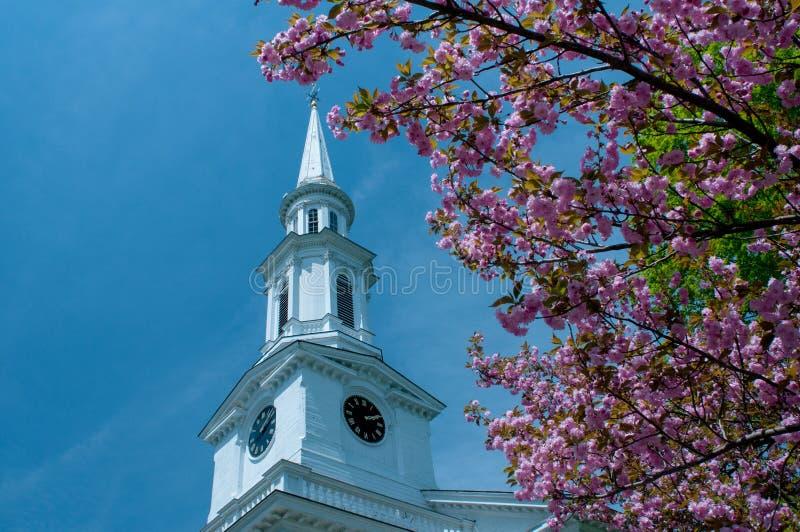 Kyrklig kyrktorn som inramas av körsbärsröda blomningar i Lexington, Massachusetts, USA arkivfoto